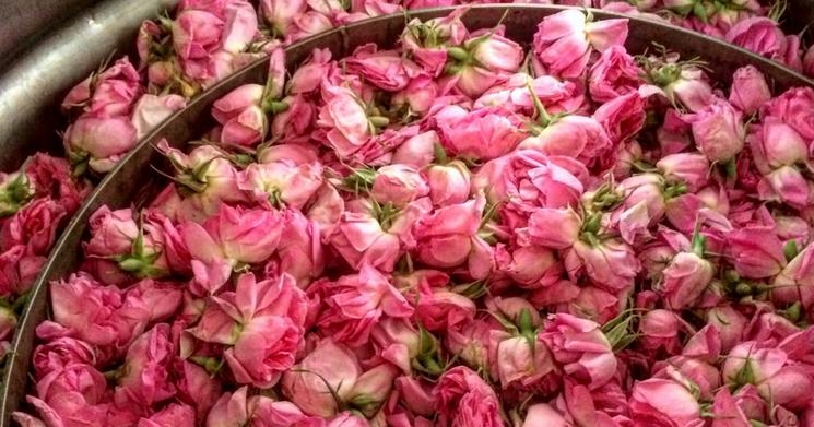 Rosewater recipe